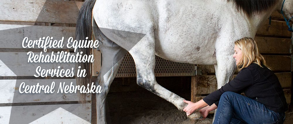 Certified Equine Rehabilitation Services In Central Nebraska