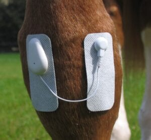 Use the Microlief on various places on your horse's body to treat acute soft-tissue injuries.