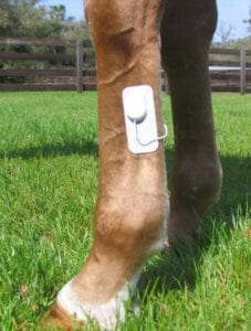 Micorlief excels at the treatment of acute injuries in horses.