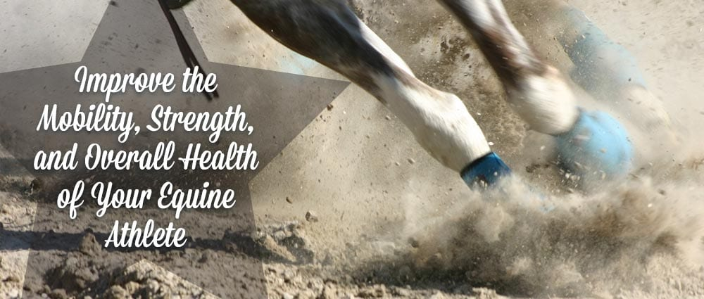 pivot-point-improve-equine-athlete